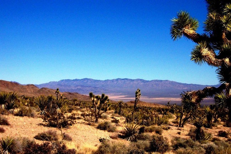 Version Name of macOS 10.14 - Mojave, Sequoia, Ventura or Sonoma